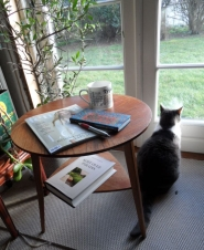 Filosofisk kat